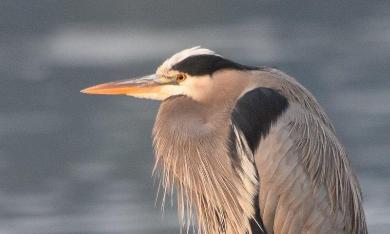 Bird Watching Water .jpeg