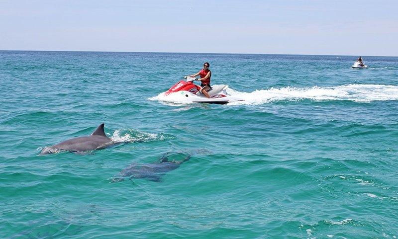Dolphin Destin.jpg