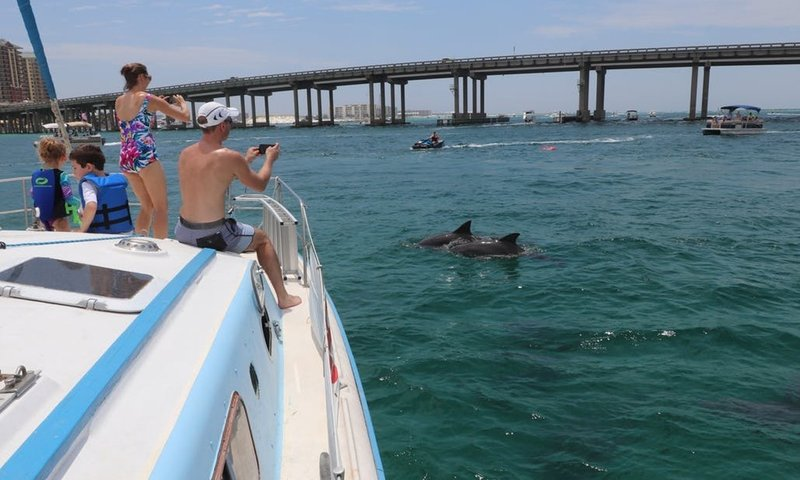 Dolphins Crab Islad.jpg