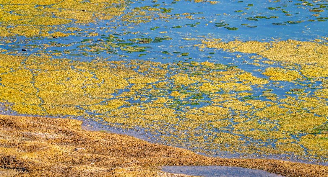 Seaweed.jpg