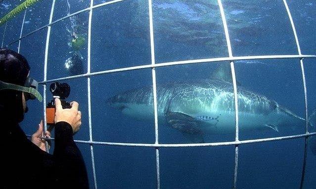 Shark Diving SA.jpg