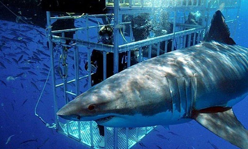 Shark Diving San Diego.jpg