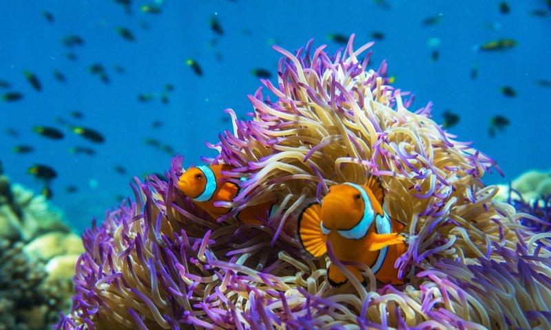 Snorkel GBR.jpg