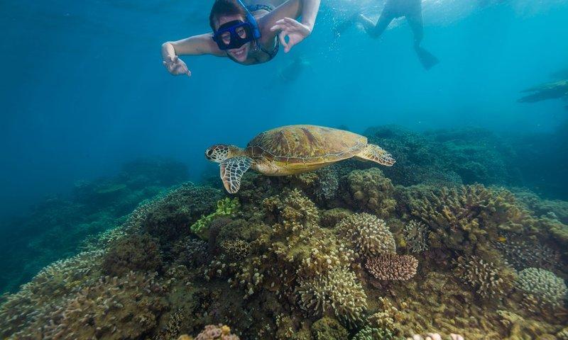 Snorkeling GBR .jpg