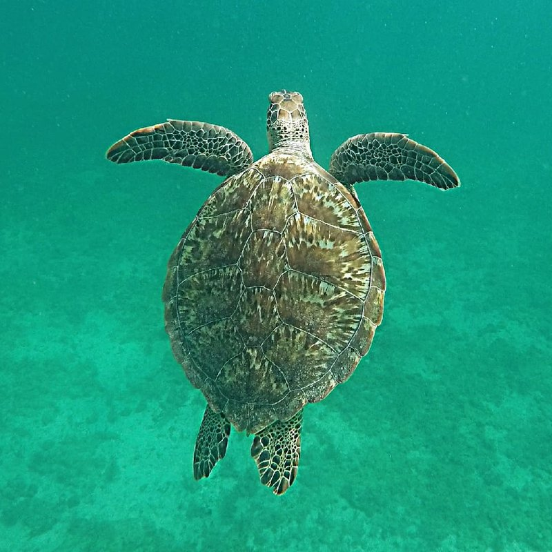 Suzanne Ryan_Noord, , Aruba (1).jpg