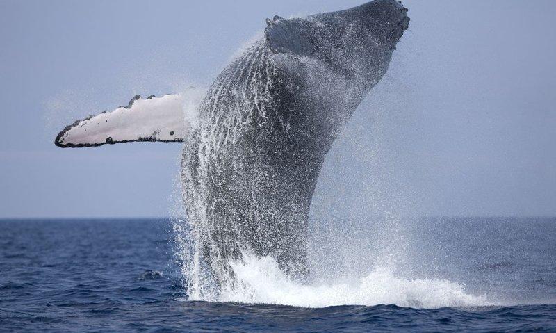 Whale .jpg