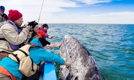 Whale Watching 2.jpg
