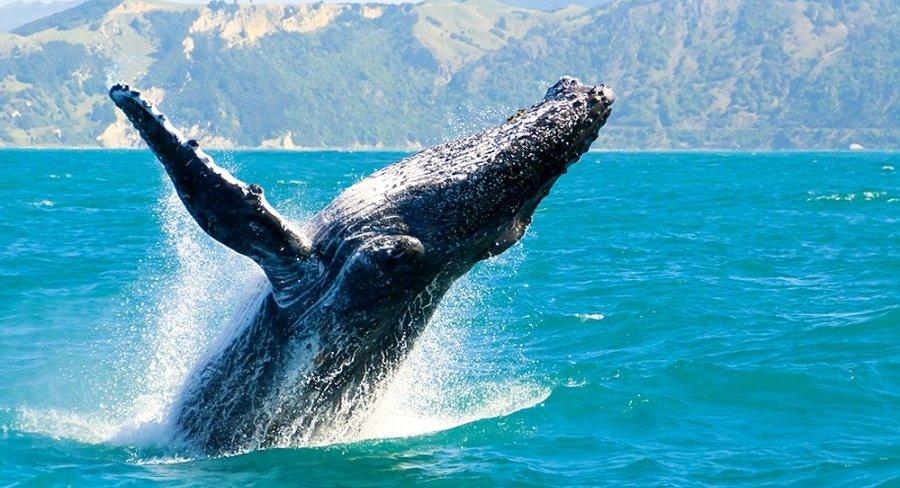 Whale Watching Long Beach.jpeg