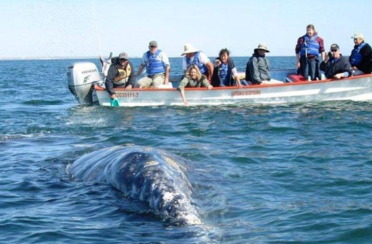 Whale Watching San Diego 2.jpg