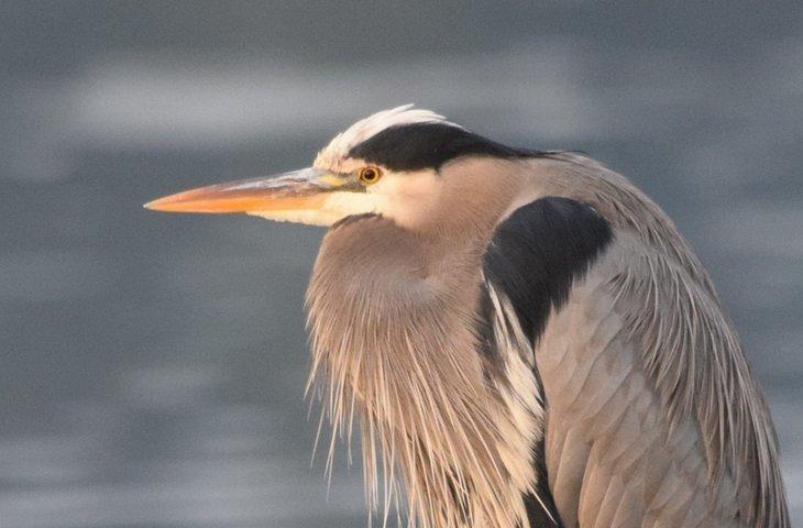 bird watching on a boat.jpeg