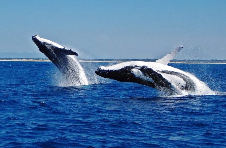 find whale watching tours.jpg